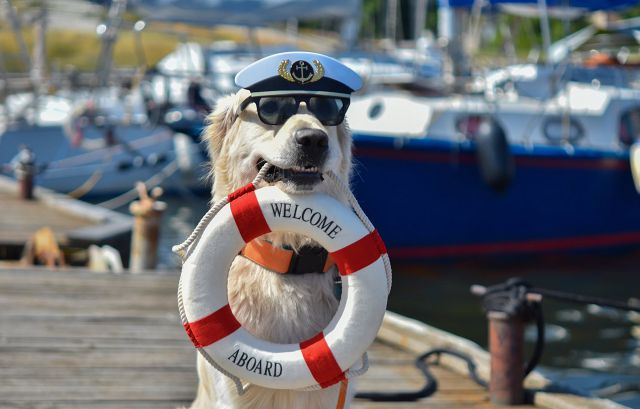 photo of A Boat Owner's Guide To Bringing Your Dog On Board